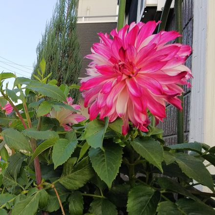 Rent this 3 bed house on Nerima in Takamatsu, TOKYO
