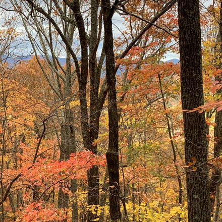 Rent this 0 bed house on Mountain Oak Rd in Ellijay, GA