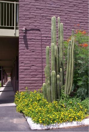 Rent this 2 bed apartment on Banner University Medical Center Tucson in 1501 North Campbell Avenue, Tucson